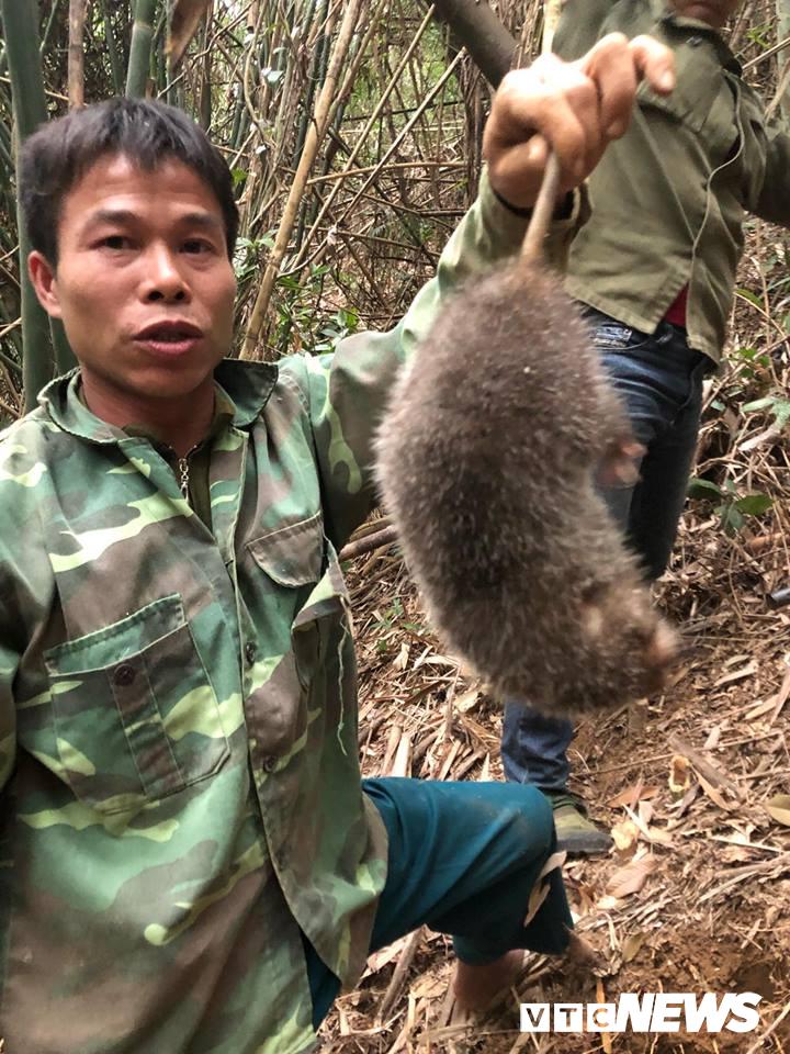 Kỳ thú chuyện săn lùng loài chuột khổng lồ trong rừng tây Yên Tử-3