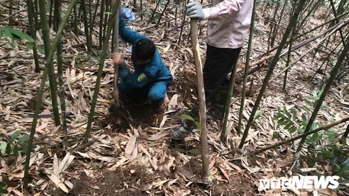 Kỳ thú chuyện săn lùng loài chuột khổng lồ trong rừng tây Yên Tử-4