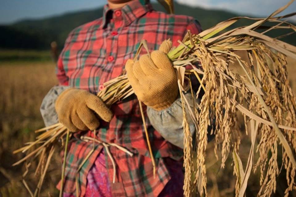 Câu chuyện xúc động của Tiến sĩ trẻ: Nếu nghèo đói là trường đại học tốt nhất, thì người mẹ nông dân của tôi chính là người thầy giáo giỏi nhất của đời tôi-3