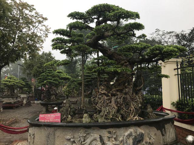 Chiêm ngưỡng cây sanh hàng trăm tuổi có giá triệu đô ở Hưng Yên-1