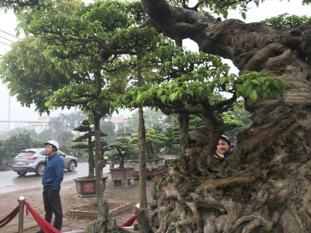 Chiêm ngưỡng cây sanh hàng trăm tuổi có giá triệu đô ở Hưng Yên-11