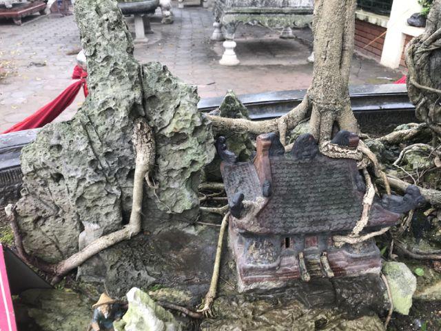 Chiêm ngưỡng cây sanh hàng trăm tuổi có giá triệu đô ở Hưng Yên-12