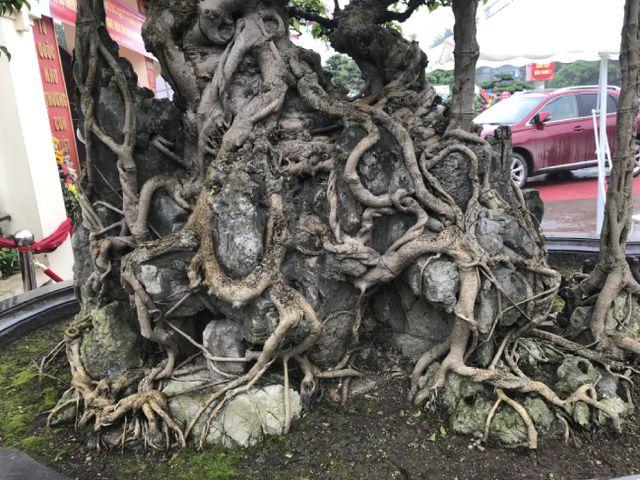Chiêm ngưỡng cây sanh hàng trăm tuổi có giá triệu đô ở Hưng Yên-14
