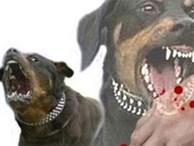 Xử lý trách nhiệm chủ đàn chó cắn chết bé trai 7 tuổi
