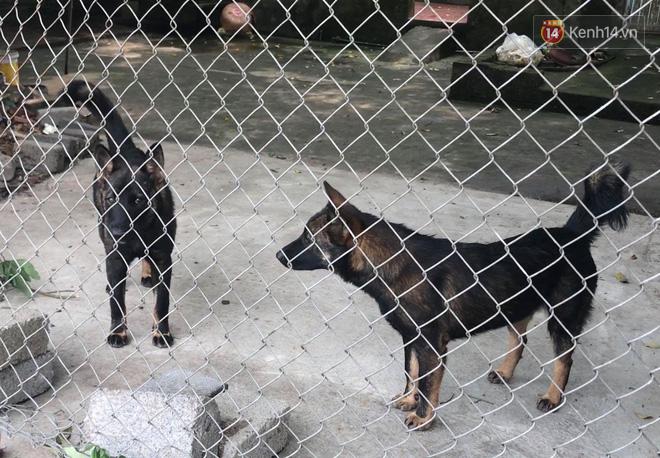 Luật sư: Chủ của đàn chó cắn tử vong bé trai 7 tuổi có thể đối mặt mức án 3 năm tù-2