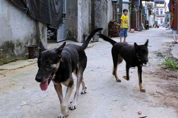Chó dại đang nuôi cắn cả nhà, cha và con trai tử vong vì chủ quan không tiêm phòng-1