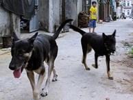 Chó dại đang nuôi cắn cả nhà, cha và con trai tử vong vì chủ quan không tiêm phòng