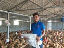 9X thôi lang thang về làng nuôi bạt ngàn gà trên cát, lãi 25 triệu/tháng