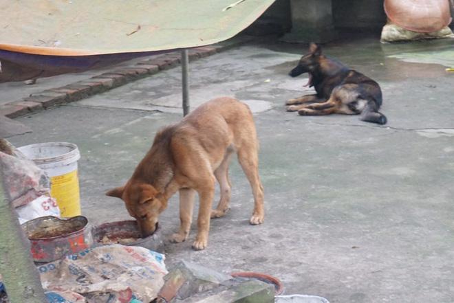 Chủ đàn chó cắn bé trai 7 tuổi tử vong: Nuôi chó để vui cửa vui nhà, sự việc xảy ra tôi cũng ân hận lắm-4