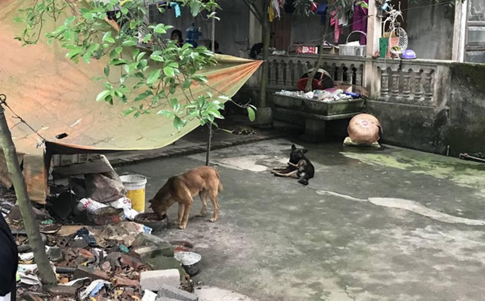 Chủ đàn chó cắn bé trai 7 tuổi tử vong ở Hưng Yên nói coi cháu bé như con cái trong nhà-1