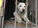 Sơn La: Thêm một bé trai 11 tuổi bị chó dại cắn, sau 3 tháng điều trị đã tử vong-2