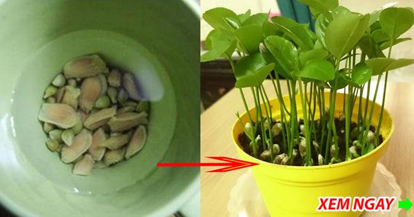 Ăn những loại quả này tuyệt đối đừng vứt hạt đi, làm theo cách này bạn sẽ vô cùng sửng sốt-1