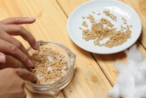 Ăn những loại quả này tuyệt đối đừng vứt hạt đi, làm theo cách này bạn sẽ vô cùng sửng sốt-7