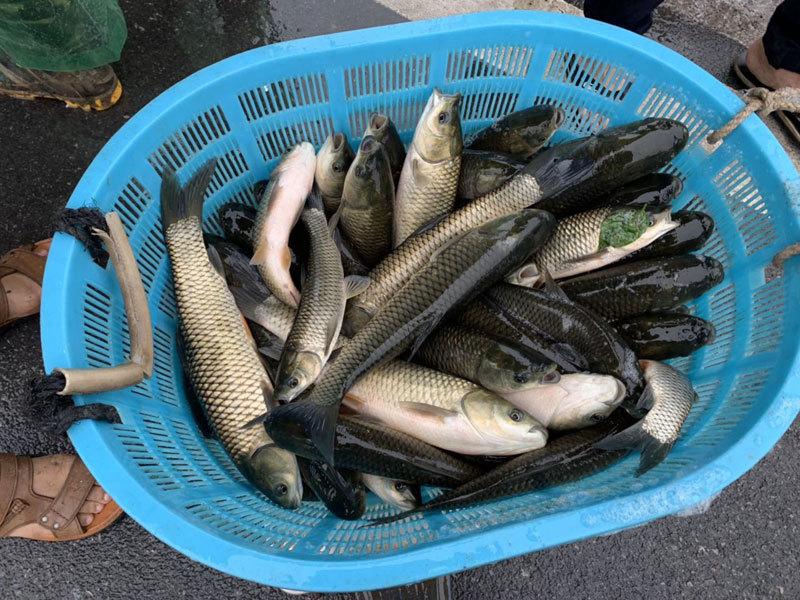 Khu dân cư đại gia: Mấy trăm triệu mua 2 tấn cá phóng sinh xuống hồ-3
