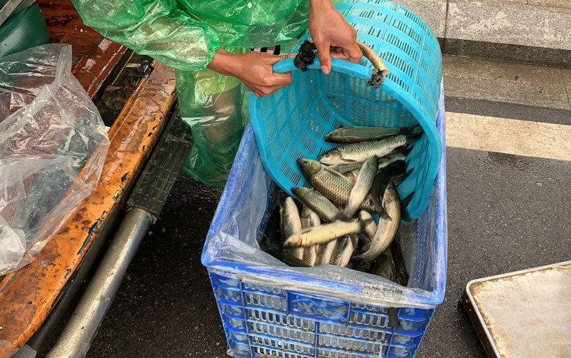 Khu dân cư đại gia: Mấy trăm triệu mua 2 tấn cá phóng sinh xuống hồ-5
