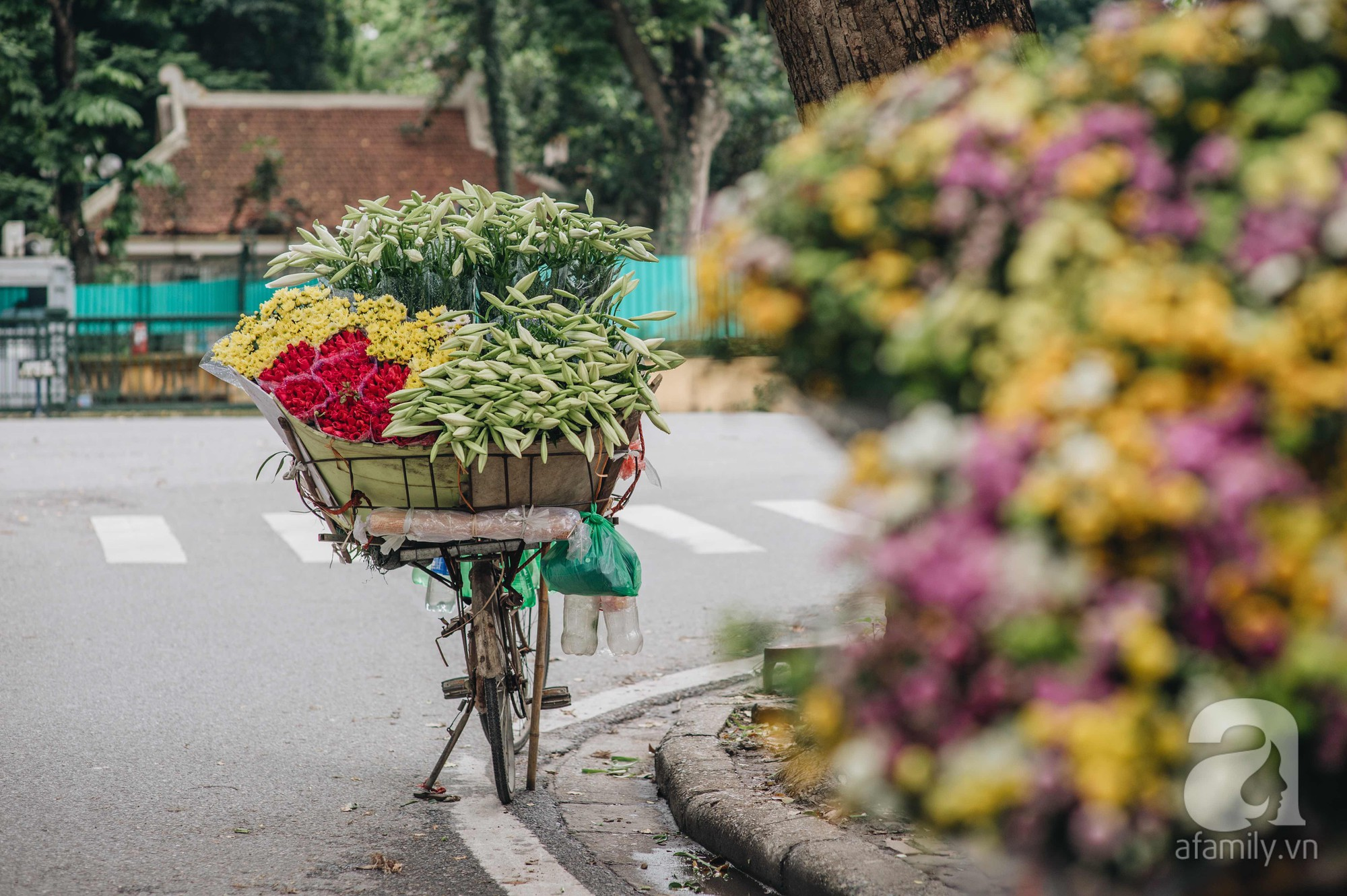 Tháng 4 về, Hà Nội lại dịu dàng những gánh loa kèn trắng tinh khôi, thơm nồng nàn khắp các góc phố-4