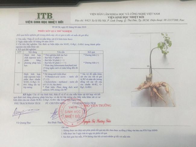 Đại gia chi tiền mua củ sâm Ngọc Linh 25 năm tuổi, giá 500 triệu đồng-16