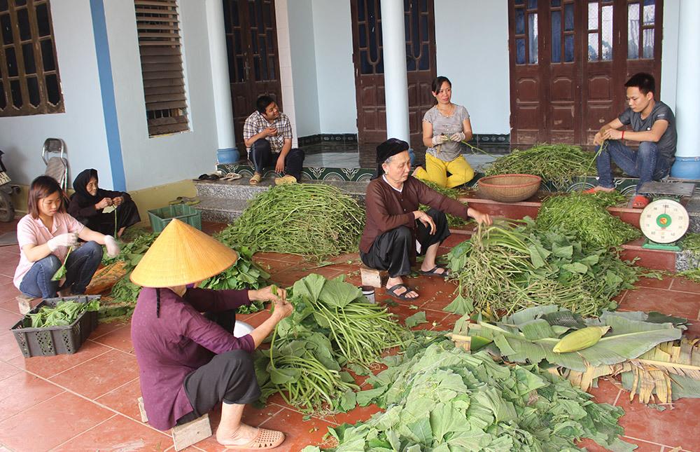 Cặp vợ chồng 20 năm giữa đảo hoang, mỗi ngày 2 tạ rau bí bán khắp Hà Nội-4
