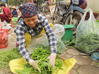 Cặp vợ chồng 20 năm giữa 'đảo hoang', mỗi ngày 2 tạ rau bí bán khắp Hà Nội
