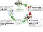 3 ổ dịch sốt xuất huyết mới trên địa bàn Hà Nội đã nhanh chóng được xử lý-2