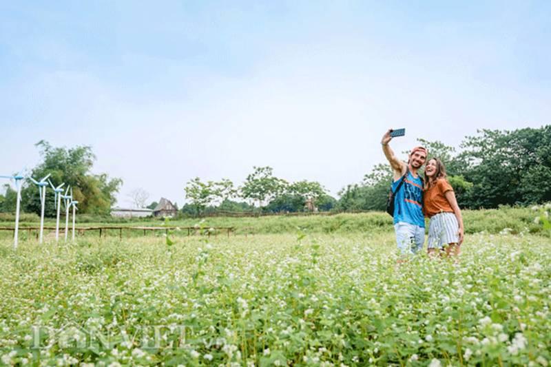 Đẹp ngất ngây thảo nguyên hoa tam giác mạch trái mùa giữa Hà Nội-8