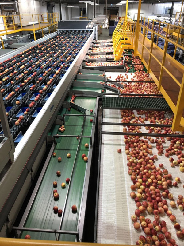 Bách hóa Xanh tự tin bán trái cây nhập khẩu rẻ hơn chợ-2