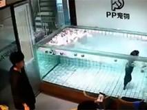 Trung Quốc: Chủ thả chó cưng vào bể nước đến chết đuối để quay phim gây phẫn nộ