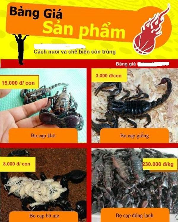 Thực hư thông tin đặc sản bọ cạp đen chữa được bệnh ung thư-2