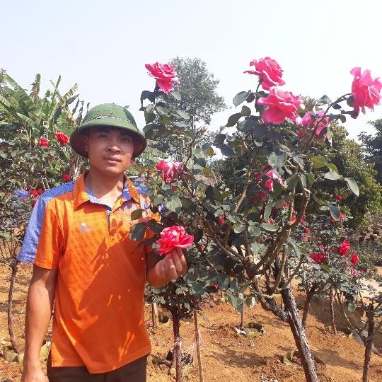 Vườn hồng cổ Trung Quốc bạc tỷ đẹp như mơ độc nhất vô nhị ở Lai Châu-5
