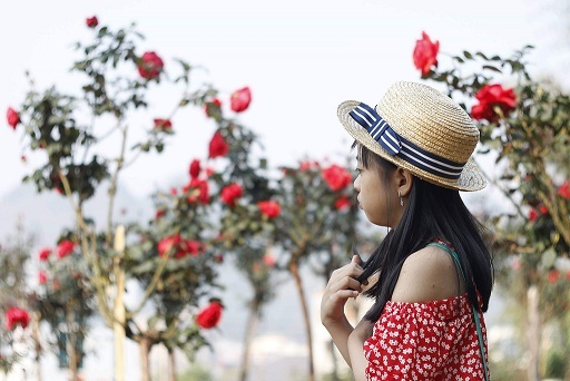 Vườn hồng cổ Trung Quốc bạc tỷ đẹp như mơ độc nhất vô nhị ở Lai Châu-6