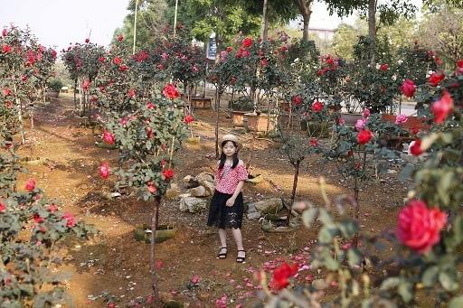 Vườn hồng cổ Trung Quốc bạc tỷ đẹp như mơ độc nhất vô nhị ở Lai Châu-7