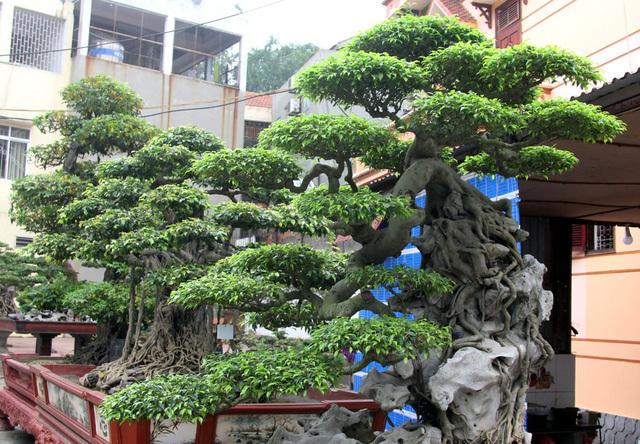 Đột nhập vườn cây trị giá cả chục triệu USD của đại gia đất Tổ-2