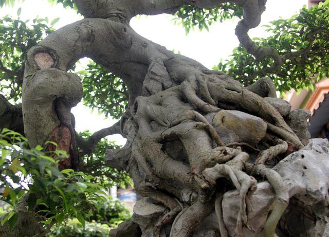 Đột nhập vườn cây trị giá cả chục triệu USD của đại gia đất Tổ-3