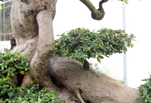 Đột nhập vườn cây trị giá cả chục triệu USD của đại gia đất Tổ-6