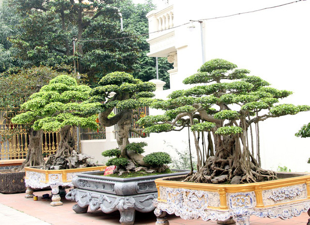 Đột nhập vườn cây trị giá cả chục triệu USD của đại gia đất Tổ-12
