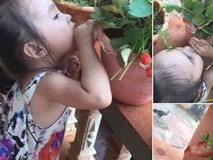 Quyết giữ lời hứa không hái quả của dì, cô bé 2 tuổi khiến người ta cười bò với cách
