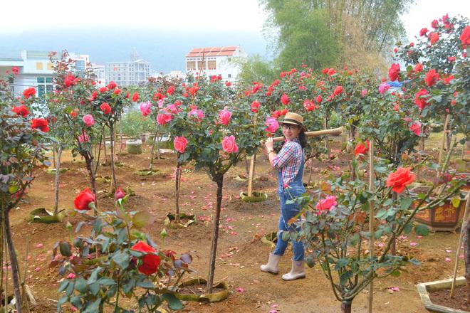 Bỏ ngân hàng đi trồng hoa, chàng trai gây dựng vườn hồng bạc tỷ-3