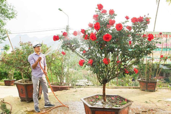 Bỏ ngân hàng đi trồng hoa, chàng trai gây dựng vườn hồng bạc tỷ-5