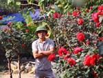 Chàng trai sở hữu vườn hoa hồng có chậu bán đến 150 triệu đồng-6