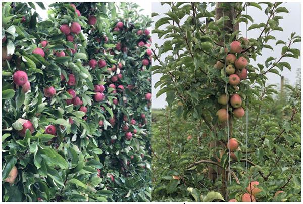 Bách hóa Xanh tự tin bán trái cây nhập khẩu rẻ hơn chợ-1