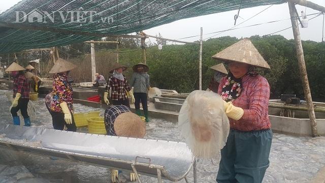 Nam Định: Săn vàng trắng nổi lập lờ bờ biển, kiếm chục triệu/ngày-1