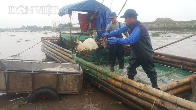 Nam Định: Săn vàng trắng nổi lập lờ bờ biển, kiếm chục triệu/ngày-2