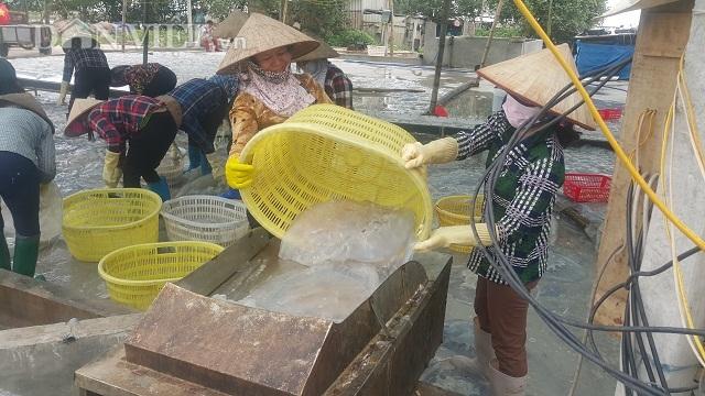 Nam Định: Săn vàng trắng nổi lập lờ bờ biển, kiếm chục triệu/ngày-3