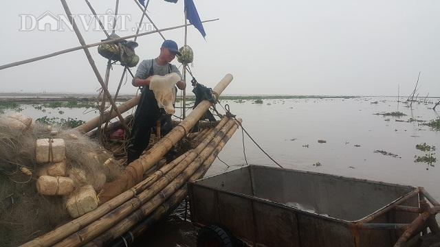 Nam Định: Săn vàng trắng nổi lập lờ bờ biển, kiếm chục triệu/ngày-5