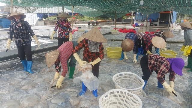 Nam Định: Săn vàng trắng nổi lập lờ bờ biển, kiếm chục triệu/ngày-6
