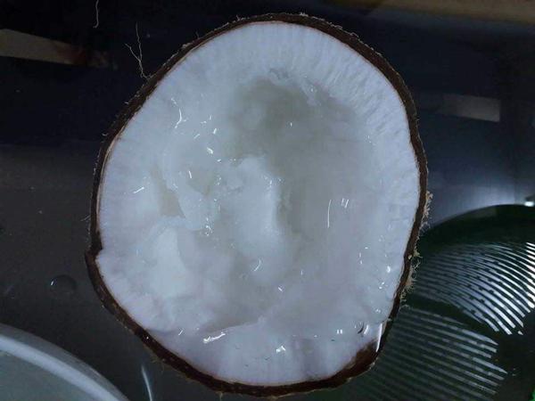 Đắt gấp 20-25 lần dừa thường, loại dừa này vẫn luôn cháy hàng-1