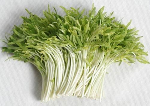 Lấy giấy ăn trồng rau mầm, 7 ngày sau rau mọc um tùm, xanh mướt-1