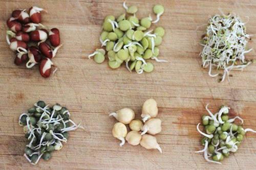 Lấy giấy ăn trồng rau mầm, 7 ngày sau rau mọc um tùm, xanh mướt-2