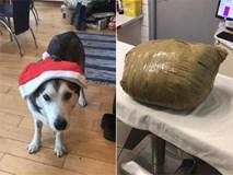 Cô gái đi du lịch về thấy chó cưng đã chết, thậm chí còn bị nhân viên chăm sóc quấn băng dính chặt cứng một cục