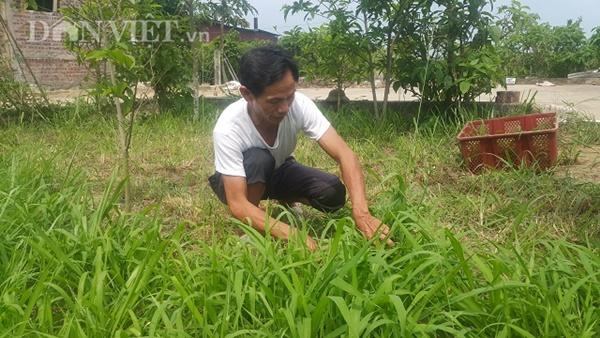 Làm giàu ở nông thôn: Nuôi thỏ bắt ăn kham khổ, bán đắt như tôm tươi-2